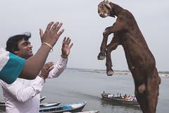 Varanasi - Ghats-8