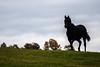 _DSC1820 3 (jimmckay77) Tags: horse silhouette