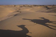 Rajasthan - Jaisalmer - Desert Safari with Camels-74