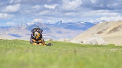 Ladakhi friend