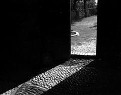 Texture (Mattia Camellini) Tags: leicaflexsl ilfosol3 analogue analog pellicola film35mm italia filmferraniap30 biancoenero vintagecamera leicasummicron250mm canoscan9000fmarkii