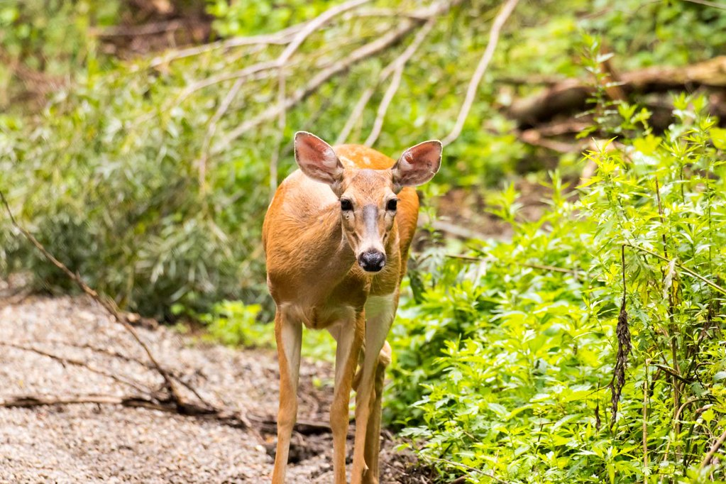 The world 39 s most recently posted photos of tilcon flickr for Deer scenery