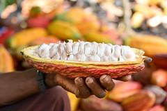 NP_Cacao_Guaviare9