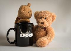 Who is Ilford? (HTBT) (13skies) Tags: ilfordfilm bw oldschool film mono teddybear cup mug drink black blackandwhite time ages longtimeago question casual fun tuesday happyteddybeartuesday sitting 13skies sonyalpha99