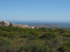 P9160314 West Coast National Park (Joanna P Dale) Tags: westcoastnationalpark flowers scenery southafrica omdem1 mk1 olympus 35mmzuiko 35mmmacro