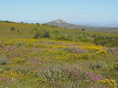 P9160335 West Coast National Park Flowers (Joanna P Dale) Tags: westcoastnationalpark flowers scenery southafrica omdem1 mk1 olympus 35mmzuiko 35mmmacro