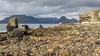 Elgol (Maria-H) Tags: sea mountains elgol scotland unitedkingdom gb olympus omdem1markii panasonic 1235