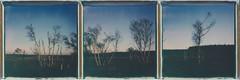 just before ... (iam.ina) Tags: inaechternach polaroid polaroidweek polapals polaroidoriginals fagnes hautes belgium belgique venn fen color blue nature nationalpark sunset sun sky siluet skies