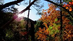 Ambiance chasse (bernard.bonifassi) Tags: bb088 06 alpesmaritimes 2017 octobre counteadenissa feuillage automne chasse affût soleil matin