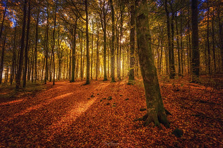 Bokemoa October Light
