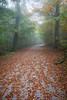 IMG_4056 (Niki.Suppan) Tags: vienna autumn fall october oktober herbst wien wanderung wandern leopoldsberg hügel herbstfarben fog nebel nebelig wanderpfad stadtwanderweg canon eos ef 2470mm 28 f28 dslr slr spiegelreflexkamera vollformat fullframe 5dii