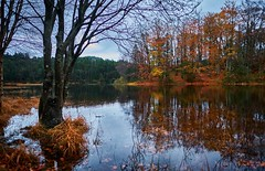 Late Autumn, Norway (Vest der ute) Tags: xt2 norway rogaland haugesund djupadalen water waterscape landscape lake fall autumn trees reflections mirror outdoor grass fav25 clouds fav200