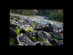 28 (izagajewska) Tags: izagajewska fotobyizagajewska bestofizagajewska bestof2007 robale tatry ciaglegory świętokrzyskie