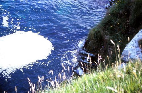 Gulls hiding
