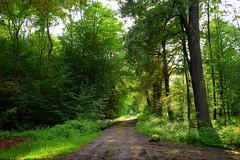 summer moods (JoannaRB2009) Tags: summer mood forest woods green nature light sunlight sunlit path mud road tree trees dolinabaryczy dolnyśląsk polska poland