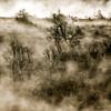 Quercy (Pluie du matin) Tags: hatman paysage landscape squared carré france midipyrénées lot quercy doré golden abstract nature arbres trees brume fog brouillard matin morning cahors