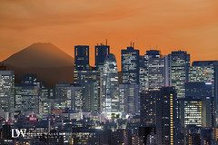 """Mt. Fuji Cityscape by Suzuki san - The sun sinks behind Mt. Fuji and Shinjuku skyscrapers.  The twin towers are part of the Tokyo Metropolitan Government Building, and the cocoon-shaped building is surprisingly named """"Mode Gakuen Cocoon Tower"""".   Images may not be copied, printed or otherwise disseminated without express written permission. Unauthorized use and/or duplication of these images and materials without written permission is prohibited.   All images are low resolution. Please contact me if you wish to use high resolution images.  Copyright © 2017 Duane Walker. All Rights Reserved."""