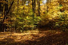 Color (joeldinda) Tags: forest woods seasons michigan hoffmasterstatepark nortonshores 2600 october nikon autumn fall colors 1v2 nikon1v2 2014 v2