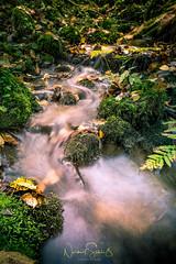 """Golden creek to the river Ilz, Bavarian Forrest (nigel_xf) Tags: gutfeuerschwendt """"bavarian forest"""" """"bayrischer wald"""" niederbayern sun sonne abendsonne deutschland germany bayern bavaria """"ferien mit hund"""" """"holiday with dog"""" nikon d750 nigel nigelxf vsfototeam forest wald bäume trees herbst autumn herbstfarben """"autumn colors"""" landschaft landscape berge hügel hills mountains """"neukirchen vorm ilz flus river bach bachlauf creek rivulet beck golden"""