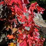 Maple waterfall thumbnail