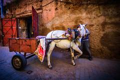 morroco-219.jpg (daviddalton) Tags: atlasmountains souk shopping medina morocco marrakech