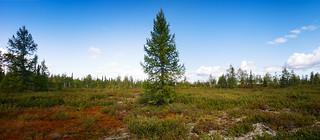 Tundra pano