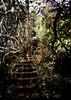 cascadeclimb (samica jones) Tags: bessa r4 cinestill 800t australian bush blue mountains leura double exposure dappled light