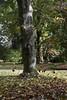 Capture the Leaves (ballongirl91) Tags: motion leaves leaf god everlasting beauty makeup you i nature sky floor