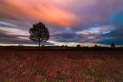 pędzą nad Pohonarami (Stach_Trach) Tags: pohorany sidra podlasie sokólszczyzna sunset zachód słońca drzewo tree mouth gryka chmury clouds
