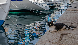 Harbour Cat - Mrs H watches the fish -  Fiskardo Harbour (Northern Kefelonia - Greece) Panasonic Lumix Lx15 compact (1 of 1)
