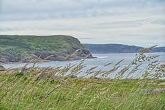 Who Has Seen the Wind (gabi-h) Tags: capespear newfoundlandandlabrador windy grass shores atlanticocean gabih