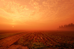 Furrows, Mist And Sunrise (Alfred Grupstra) Tags: nature sunset ruralscene agriculture sun sunlight landscape field sunrisedawn farm outdoors morning tree summer sky scenics land dusk nonurbanscene dawn 979