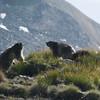DSC_7867 (lollus) Tags: green marmotte marmots