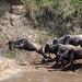 Mara Safari-9139.jpg