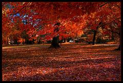 The colors of autumn.... (scorpion (13)) Tags: flroa cologne walk nature color creative trees leaves sun potoart autumn frame