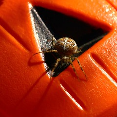Happy Halloween! (murraymike89410) Tags: sequim washington 100mmlmacro macromondays halloween hmm