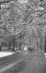 First Snow 10-27-2017 024 (wogggieee) Tags: bear lake mn minnesota white whitebearlake colors county fall hugo pretty ramsey snow trees washington winter unitedstates us