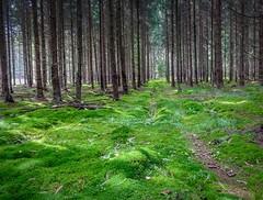 Forest (Piotr Mierzejewski) Tags: lumix lx5