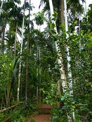 P1000332.jpg (Beth Doherty) Tags: india goa spice plantation