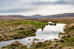 Dartmoor puddle