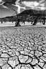 A000081 (John M. Piris) Tags: bw landscape dry water trees