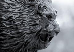 Leo (guzmania*) Tags: macromondays theme zodiac sign macro metal lion bw blackandwhite bokeh león leo