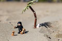 Don't touch my cookie! (Ballou34) Tags: 2017 7dmark2 7dmarkii 7d2 7dii afol ballou34 canon canon7dmarkii canon7dii eos eos7dmarkii eos7d2 eos7dii flickr lego legographer legography minifigures photography stuckinplastic toy toyphotography toys sausalito california étatsunis us starwars sw star wars kylo ren sand cookie the last jedi force awakens tfa tlj beach palm tree bb8 teddy bear