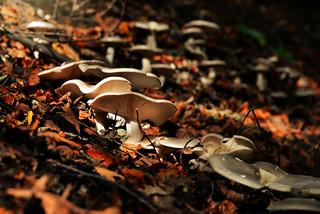 Autumn fungi