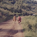 Three Masai warriors on road to Ngorongoro crater
