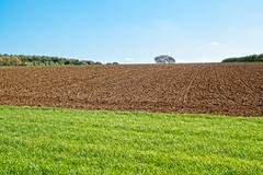 Autumn Landscape (enneafive) Tags: landscape grass earth trees leaves colouring horizon field sky blue fujifilm xt2