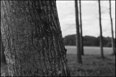 Tree (Romain Massola) Tags: nature landes arbre tree champ field campagne country countryside leica m6 canon 50mm canon50mmf14ltm ilford hp5 bw nb blackandwhite noiretblanc bwfp epson v700 epsonv700 rodinal