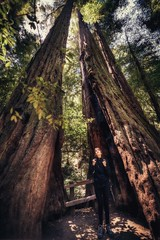 DSC_5242H_1 (Ramiro Marquez) Tags: tree scale large redwood forest california muirwoods trees nature