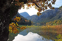 Colorful autumn at the Thumsee (rotraud_71) Tags: germany badreichenhall thumsee lake reflections tree mountains autumn bavaria concordians