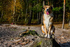 october-2017 (louisa.vàlinth) Tags: keks dogs doglover love campanion colliemix